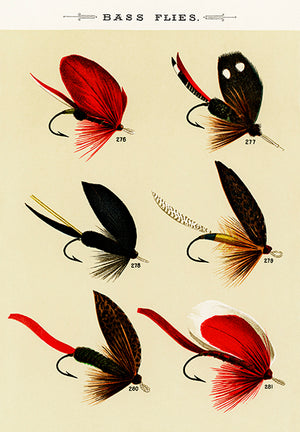 Bass Flies #2 - 1892 - Fishing Illustration Poster