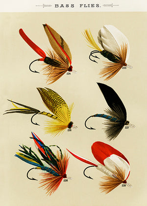 Bass Flies #3 - 1892 - Fishing Illustration Poster