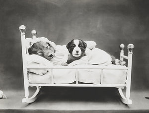 Bedtime - Dog And Puppy In A Cradle - 1914 - Photo Poster