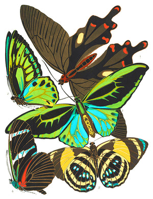 Butterfly Papillons #1 - Insect Illustration Magnet