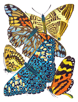 Butterfly Papillons #3 - Insect Illustration Poster