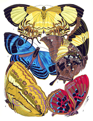 Butterfly Papillons #4 - Insect Illustration Magnet