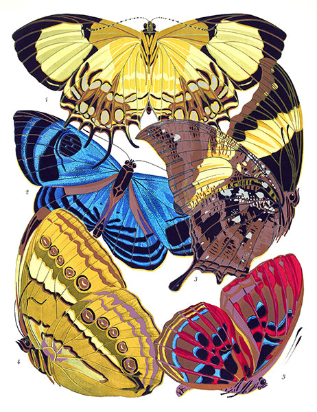 Butterfly Papillons #4 - Insect Illustration Poster