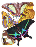 Butterfly Papillons #8 - Insect Illustration Poster