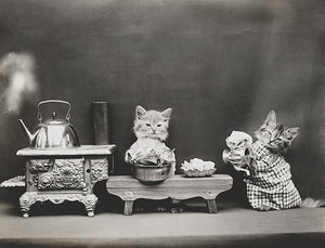 Cats Kittens Washing Dishes - 1914 - Animal Photo Poster