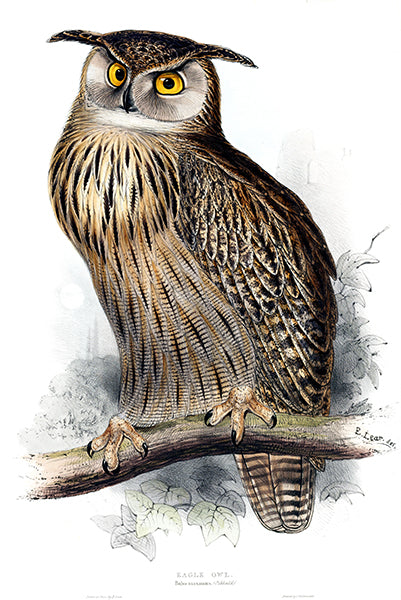 Eagle Owl - Bubo Maximus - 1837 - Bird Illustration Poster