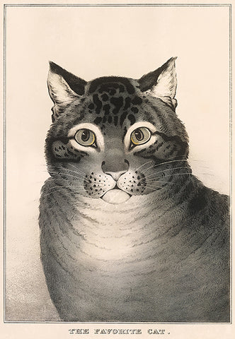 Favorite Cat - 1838 - Illustration Poster