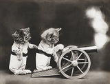 Fire Cannon! - Cats - Kittens - 1914 - Animal Photo Poster