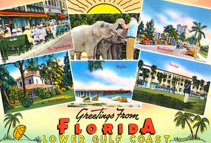 Greetings From Florida - Lower Gulf Coast - 1930's - Vintage Postcard Poster