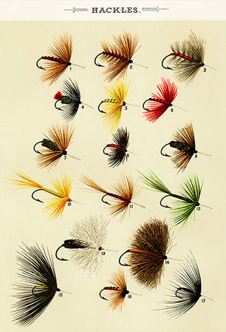 Hackles Flies - 1892 - Fishing Illustration Poster