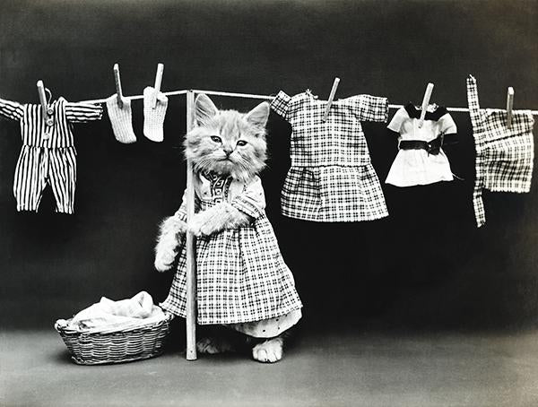 Hanging Up The Wash - Cat Kitten Laundry - 1914 - Photo Mug