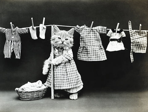 Hanging Up The Wash - Cat Kitten Laundry - 1914 - Photo Poster