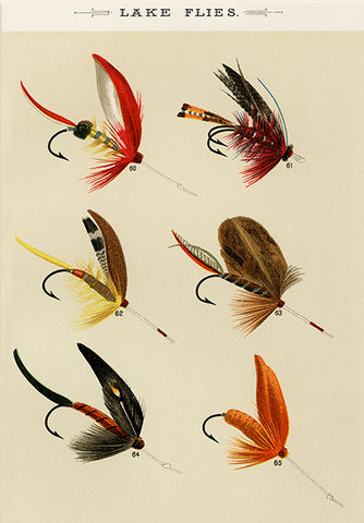 Lake Flies - 1892 - Fishing Illustration Poster