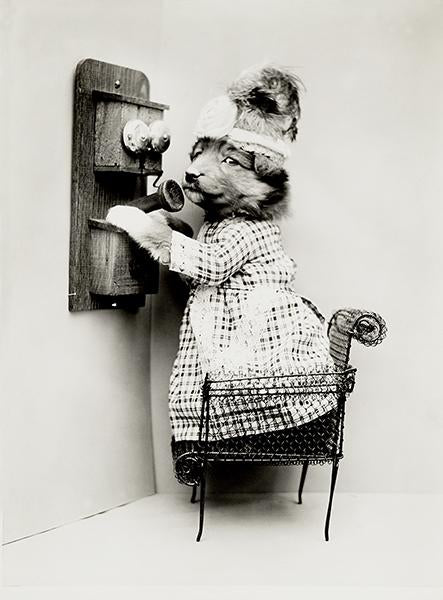 Making A Date - Dog Puppy On Telephone - 1914 - Photo Magnet