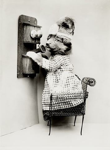 Making A Date - Dog Puppy On Telephone - 1914 - Photo Poster