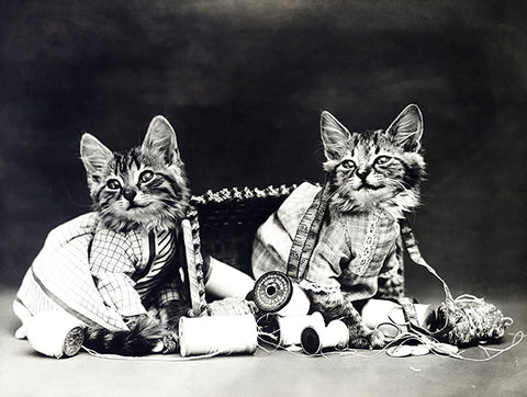 Mischief Makers - Cats Kittens Sewing - 1915 - Animal Photo Poster