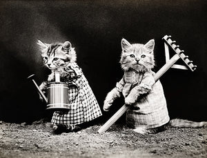 Planting Time - Cats Kittens Gardening - 1914 - Photo Poster