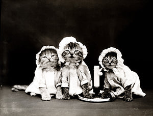 Ready For Bed - Cats Kittens Pajamas - 1914 - Animal Photo Poster
