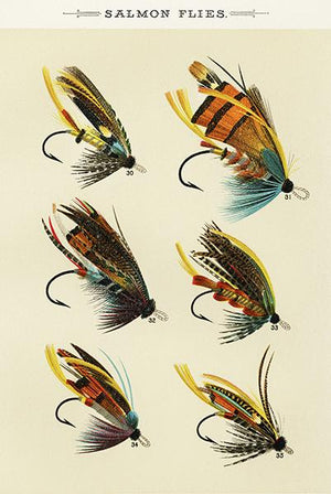 Salmon Flies - 1892 - Fishing Illustration Magnet