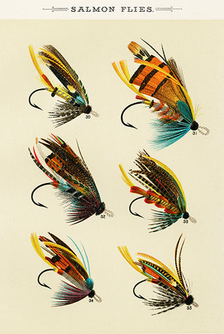 Salmon Flies - 1892 - Fishing Illustration Poster