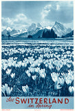 See Switzerland In Spring - 1950's - Travel Poster