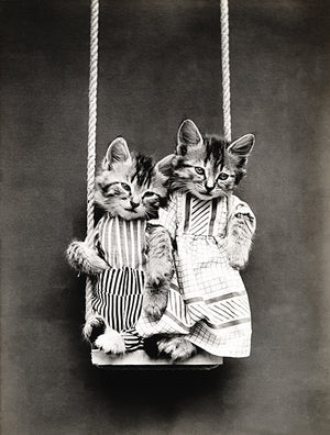 Swinging - Cats - Kittens - 1914 - Animal Photo Poster