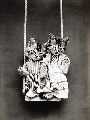 Swinging - Cats - Kittens - 1914 - Animal Photo Magnet