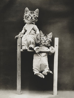 The Acrobats - Cats Kittens On A Pull-Up Bar - 1914 - Photo Poster