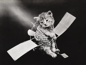The Aviator - Cat Kitten On Toy Glider Plane - 1914 - Photo Magnet