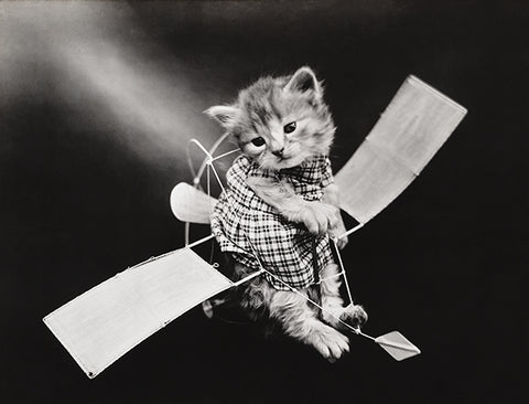 The Aviator - Cat Kitten On Toy Glider Plane - 1914 - Photo Poster
