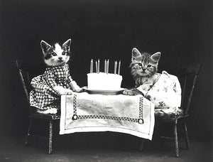 The Birthday Cake - Cats Kittens - 1914 - Photo Poster