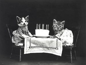 The Birthday Cake - Cats Kittens - 1914 - Photo Magnet