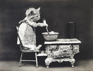 The Cook - Cat - Kitten - 1914 - Animal Photo Magnet