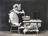 The Cook - Cat - Kitten - 1914 - Animal Photo Poster
