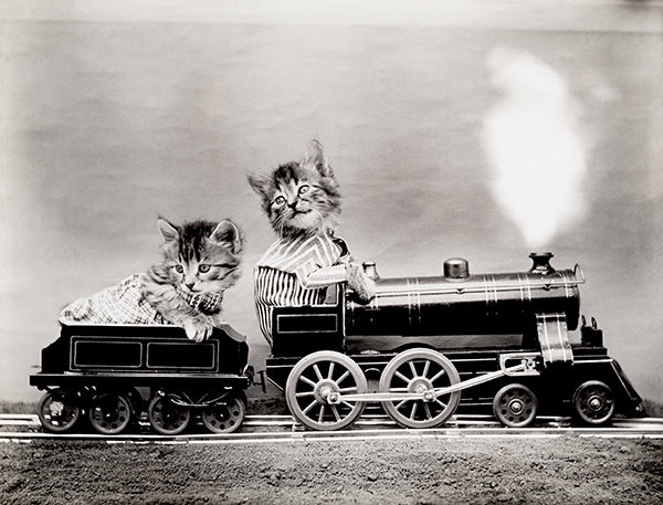 The Fast Express - Cats Kittens On Train - 1914 - Animal Photo Poster