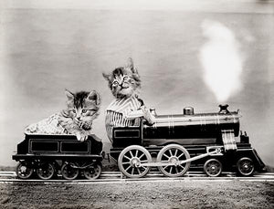 The Fast Express - Cats Kittens On Train - 1914 - Animal Photo Magnet