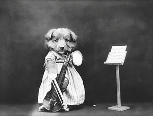 The Fiddler - Puppy Playing Musical Instrument Cello - 1914 - Photo Poster