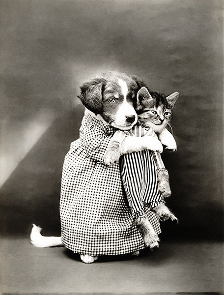 The Nurse -  Puppy Holding A Kitten - 1914 - Animal Photo Poster