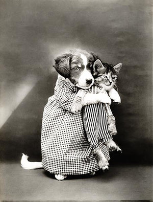 The Nurse -  Puppy Holding A Kitten - 1914 - Animal Photo Magnet