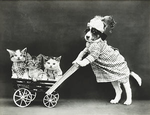 The Outing - Puppy Kittens Stroller - 1914 - Photo Poster