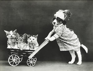 The Outing - Puppy Kittens Stroller - 1914 - Photo Magnet