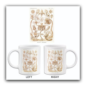 Tubulariae Rohrenpolnpen - 1904 - Illustration Mug