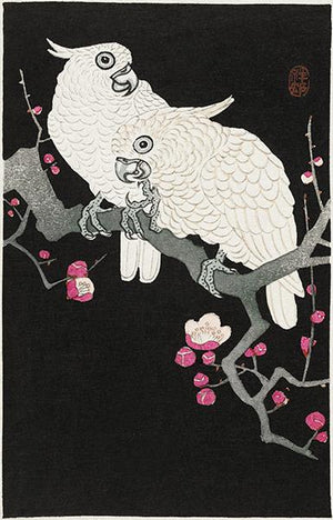 Two Cockatoo And Plum Blossom - 1930's - Japanese Art - Bird Illustration Magnet