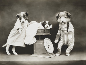 Weighing The Baby - Dogs And Puppy With A Scale - 1914 - Photo Poster