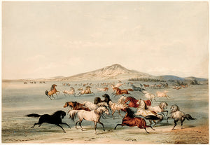 Wild Horses At Play - 1844 - Illustration Magnet