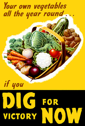Your Own Vegetables - Dig For Victory - 1940's - World War II - Propaganda Poster