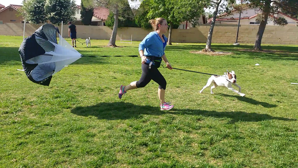 $17.77 for a 3 week Dog Fitness Membership, (unlimited sesssions at 67% OFF)