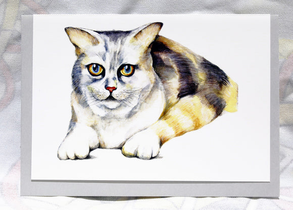 Greeting cards-Ginger cat