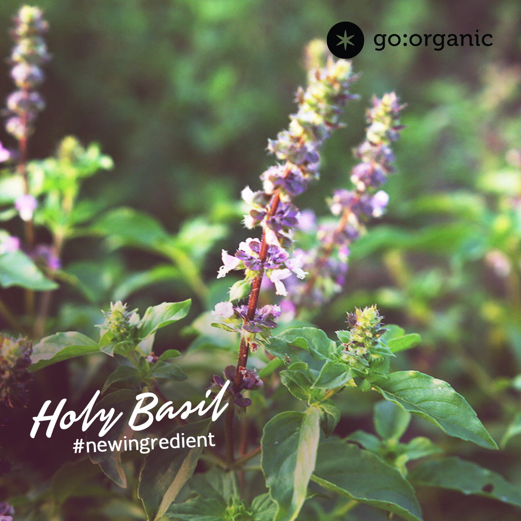 Holy Basil - A miracle herb