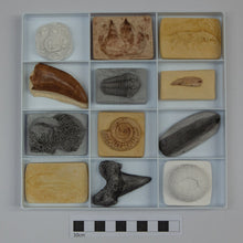 Load image into Gallery viewer, An Introduction to Fossils - Online Course Autumn 2021